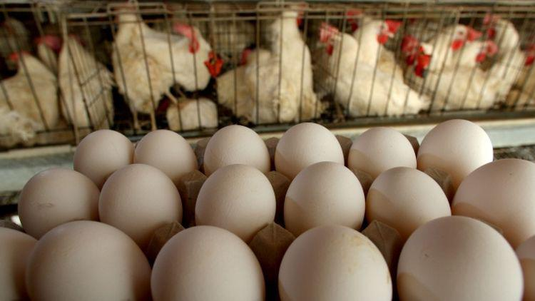 netherlands eggs insecticide