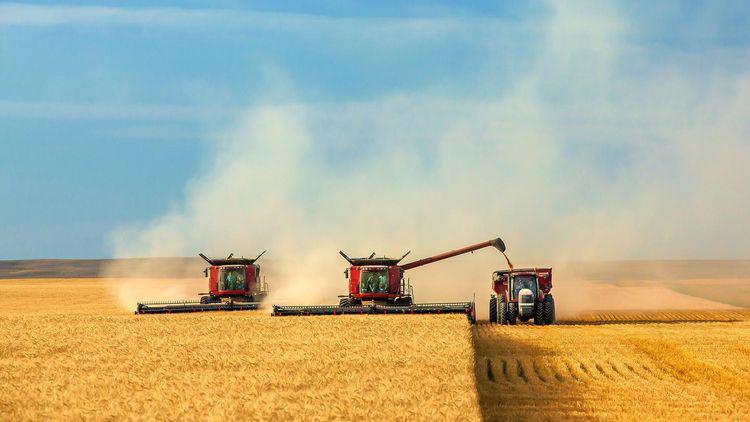 россия зерно